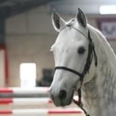 Longes cheval