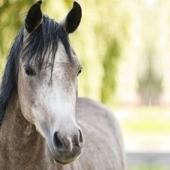 Récupération du cheval