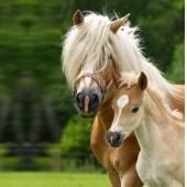 Soin de la peau du cheval