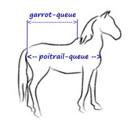 choix de taille couverture cheval